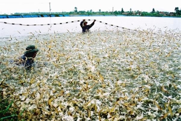 Thanh Hóa: Sản lượng khai thác và nuôi trồng thủy sản đạt gần 17 nghìn tấn trong tháng 5/2021