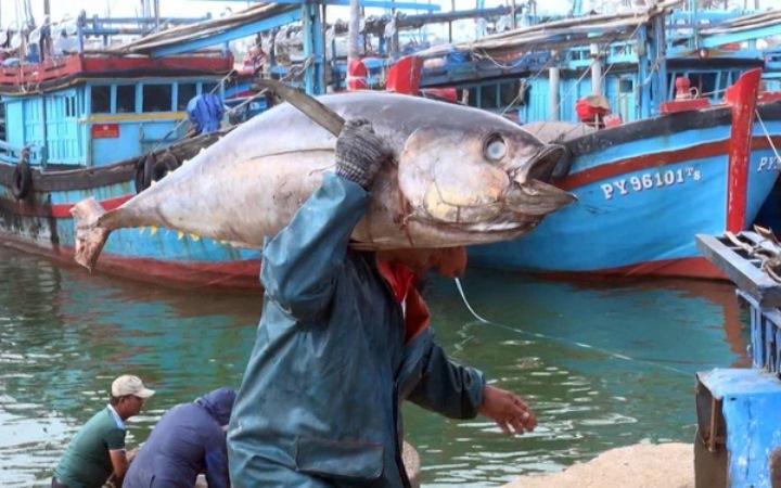 Tháng 4, xuất khẩu cá ngừ tăng 50%