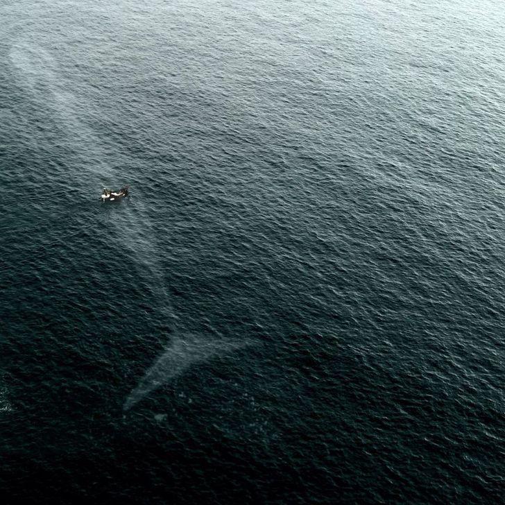 6 sinh vật tưởng chỉ có trên phim nhưng hóa ra có thật trong tự nhiên