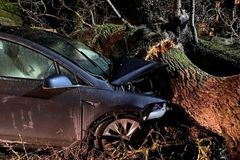 Nhành cây cổ thụ hơn 100 tuổi đè bẹp ô tô, 4 người thoát chết thần kỳ