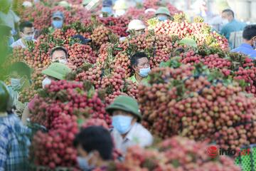 Bắc Giang: Nửa đêm bật dậy đi hái vải, điểm thu mua tắc dài cả cây số