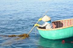 Lặn biển 'cược tính mạng' kiếm tiền từ loại cây mọc sâu 10m