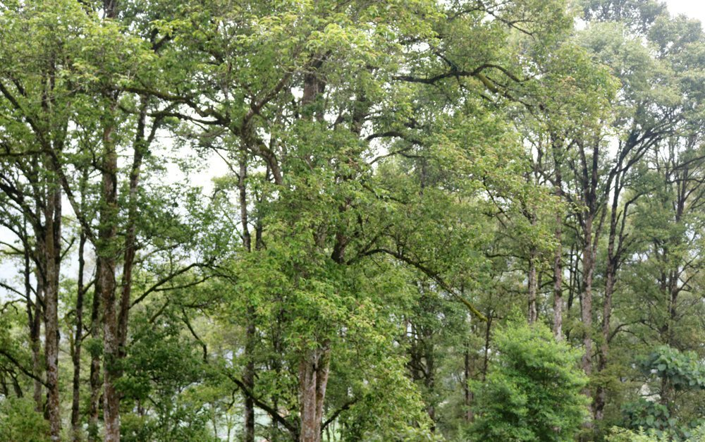 Lào Cai: Dự kiến trồng 1 tỷ cây xanh góp phần bảo vệ môi trường