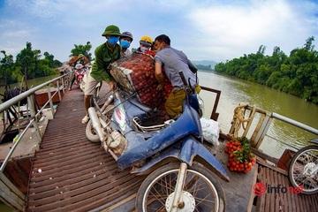 Chòng chành 'cõng' vải thiều qua cầu phao: 'Ngã lộn xuống sông nhiều lần, giờ tôi thuê người đẩy xe cho an toàn'