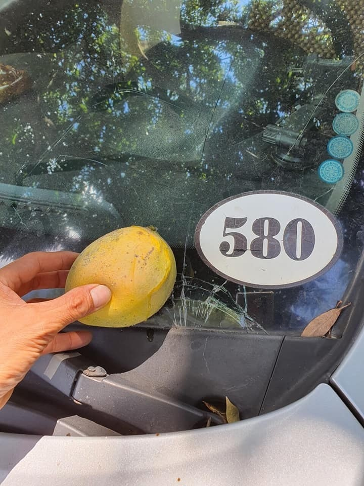 Dở khóc dở cười với những trái xoài Việt Nam được 'định giá' vài chục triệu đồng