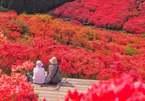 Chiêm ngưỡng sắc đỏ mùa thu giữa bạt ngàn màu xanh mùa hè