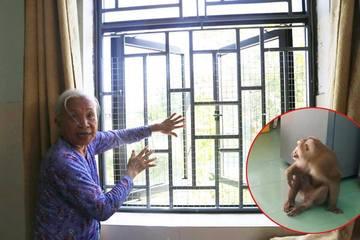 Quảng Nam: Khỉ lạ 'đột nhập' nhà dânquậy phá, mở tủ lạnh lục đồ ăn