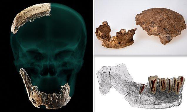 Phát hiện nhóm người bí ẩn đầu phẳng, răng to, không có cằm từng sinh sống ở Israel