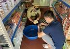 Lạng Sơn: Tiêu hủy hàng hóa, thực phẩm quá hạn sử dụng trị giá gần 10 triệu đồng