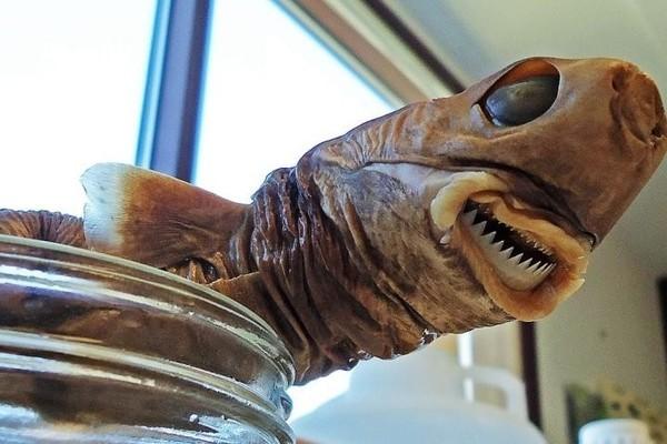 Sinh vật nhỏ xíu này có thể tấn công kẻ thù to lớn hơn gấp nhiều lần, dùng răng cắn hỏng tàu ngầm