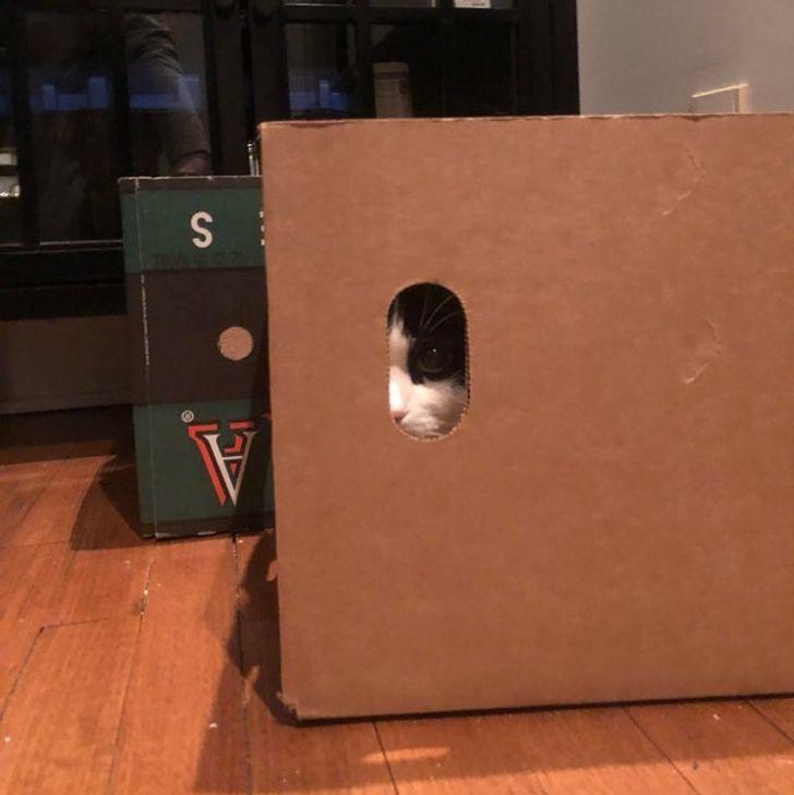 Muôn vàn kiểu chơi trốn tìm hài hước của thú cưng trong nhà