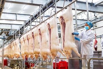 Chợ đầu mối nông sản Hóc Môn tạm dừng, Vinmart cung ứng 1800 con heo thịt/ngày giá ổn định