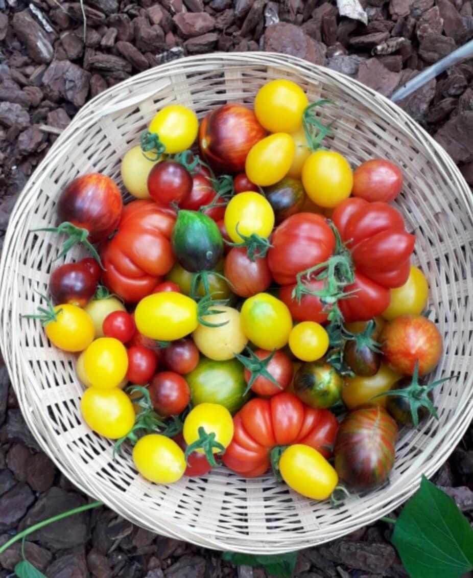 Bà mẹ Bỉ làm khu vườn rau trái sum sê để nuôi dưỡng tuổi thơ tươi đẹp cho các con