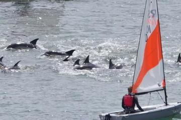Bất ngờ gặp đàn cá heo đua theo thuyền trên sông ở Anh