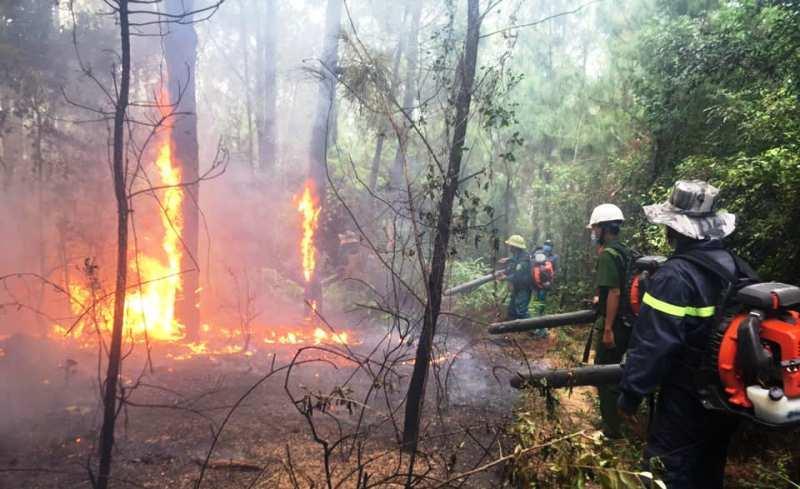 Nghệ An: Rừng thông 20 năm tuổi bốc cháy ngùn ngụt