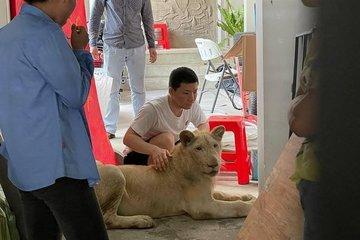 Cảnh sát tịch thu con sư tử bị người đàn ông Trung Quốc biến thành thú cưng