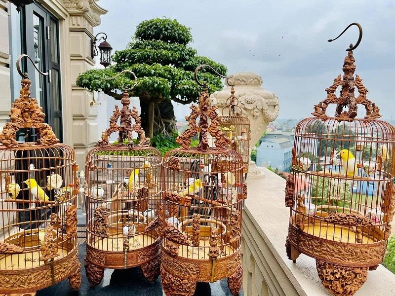 Đại gia Việt 'khoe' đàn chim cảnh tiền tỷ gây tranh cãi