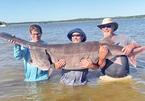 Đi câu cá vui vui, ai dè bắt được cá tầm khủng nặng gần 80 kg tại Mỹ