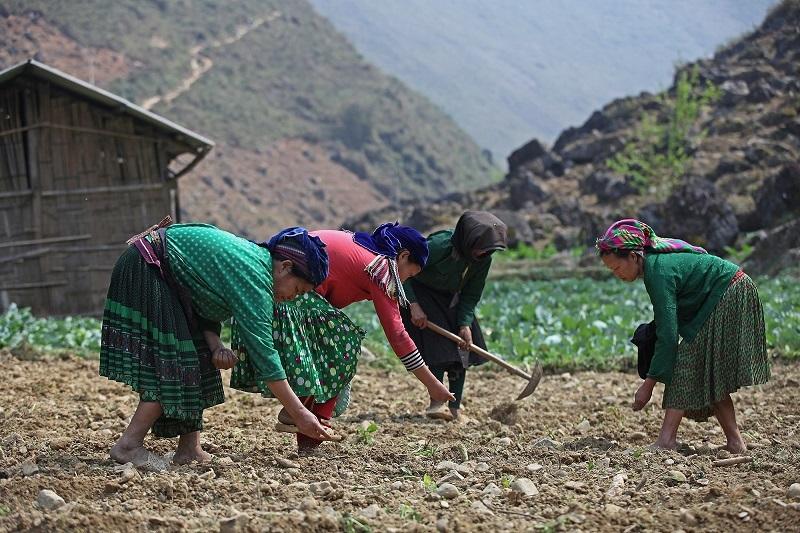 Ưu tiên đầu tư phát triển kinh tế vùng dân tộc thiểu số và miền núi