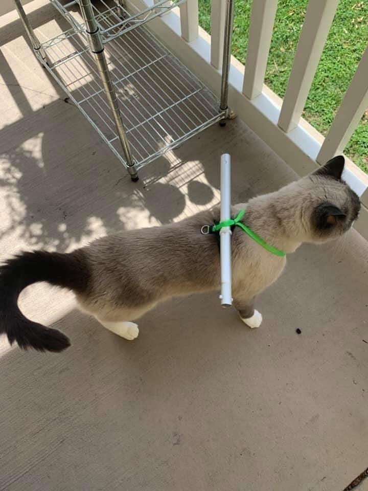 Lo sợ mèo cưng 'nhảy lầu' đi bụi, chủ nhân nghĩ ra cách cản chân có '1-0-2'