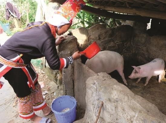 Quảng Ninh phát triển bền vững vùng đồng bào dân tộc thiểu số