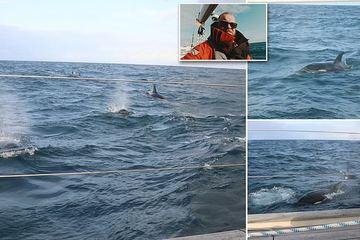 Khoảnh khắc kinh hoàng 30 con cá voi sát thủ vây hãm, tấn công du thuyền