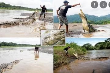 Tay không cho cá sấu ăn, công việc nguy hiểm không dành cho kẻ yếu tim