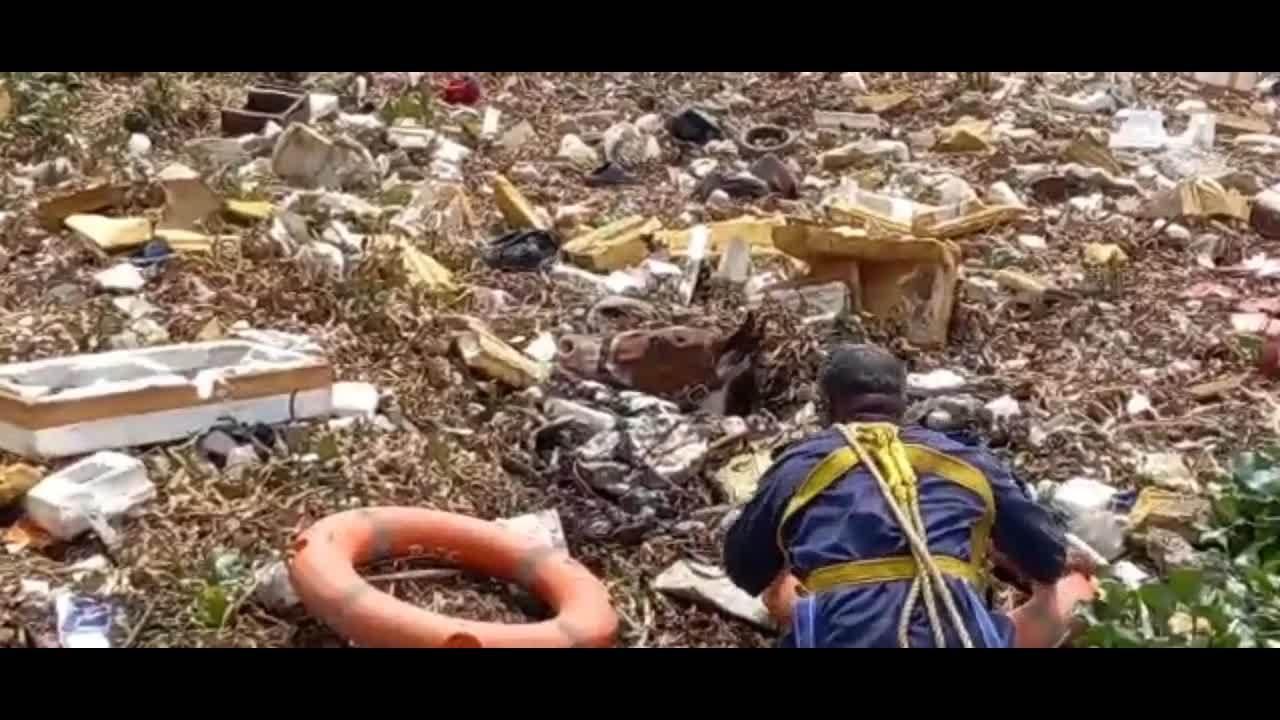 Nhân viên cứu hộ liều mình đi vào đầm lầy rác cứu ngựa gặp nạn