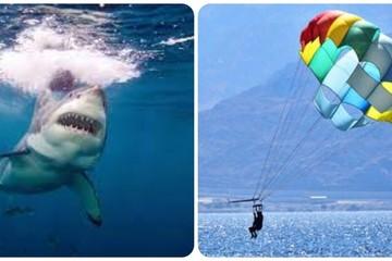 Hạ cánh trên mặt nước, người đàn ông bị cá mập lao lên cắn đứt chân