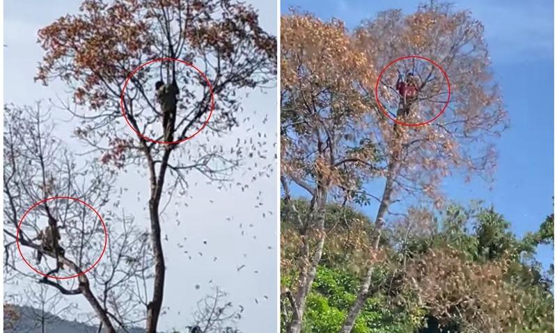 Trèo cây lấy quả ươi, nam thanh niên rơi xuống đất tử vong