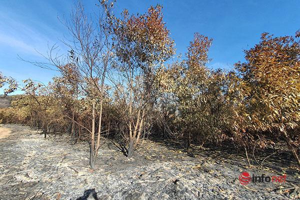 Đạn lân tinh phát nổ gây cháy 213ha rừng, đồi thông mất màu xanh