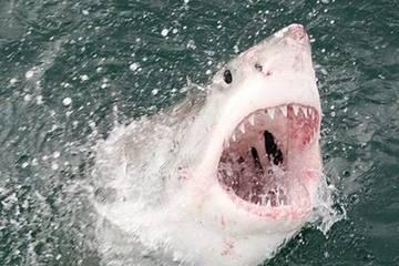 Đối mặt với cá mập trắng lớn, người đàn ông may mắn thoát chết