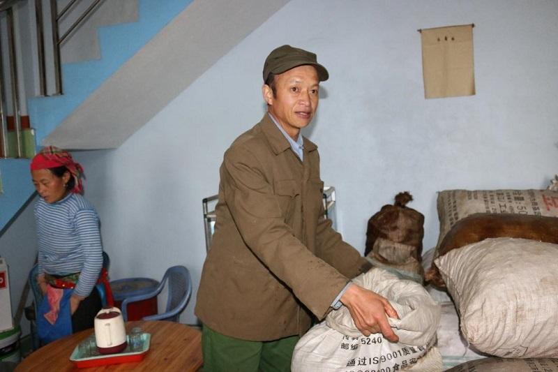 Người Mông làm giàu từ cây thảo quả