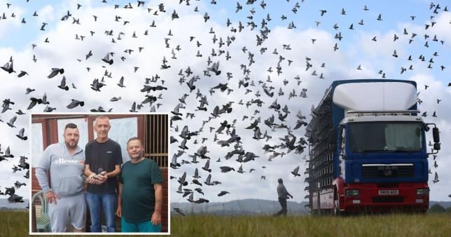Hàng ngàn chim bồ câu mất tích bí ẩn trong vụ 'tam giác quỷ Bermuda trên không'