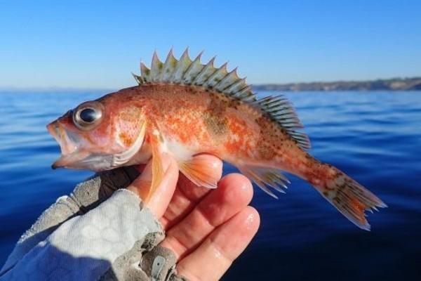 Thú vui câu cá siêu nhỏ thư giãn ở Nhật Bản