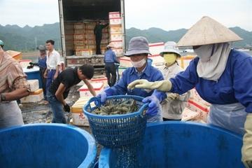 Hải Phòng: Sản lượng nuôi trồng, khai thác thủy sản 6 tháng đầu năm ước đạt 95.000 tấn