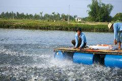 Cần Thơ: Diện tích nuôi trồng thủy sản trong 6 tháng đầu năm ước tăng 2,22%