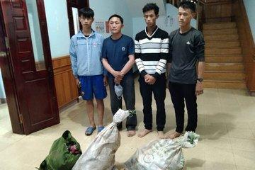 Bắn chết 2 cá thể sơn dương trong Vườn quốc gia, 4 đối tượng bị bắt