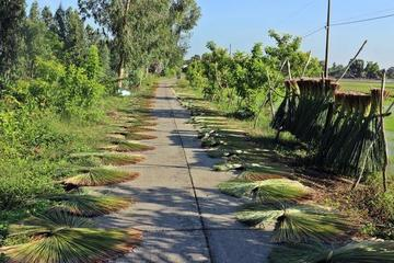 Người Khmer ở Phú Mỹ sống nhờ đồng cỏ bàng