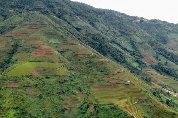 """Người Mông ở Bắc Yên: Cái nghèo đeo bám dù đang ngồi trên… """"núi vàng"""""""