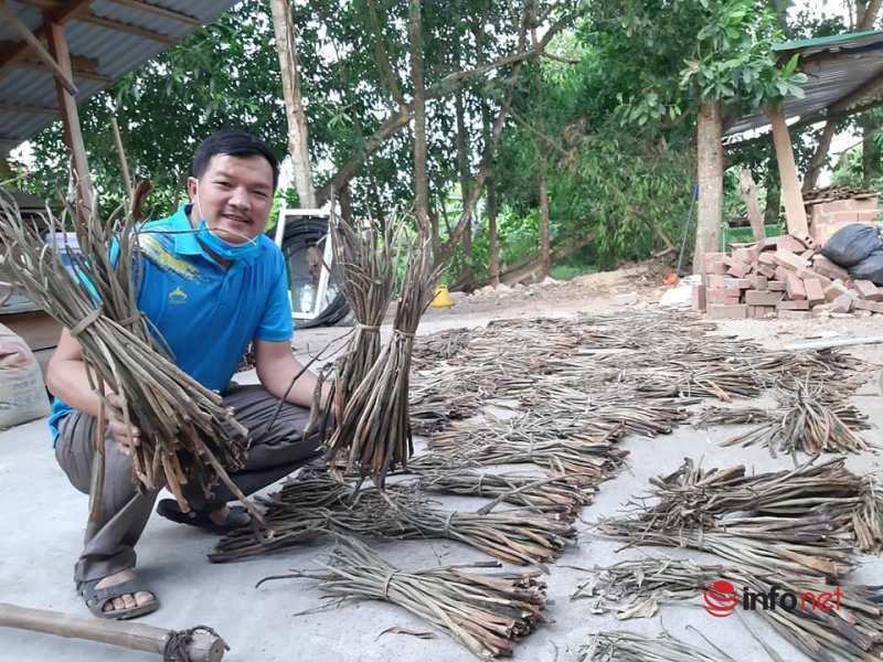 bèo tây,thủ công,mỹ nghệ,Hà Tĩnh,nghề đan lát