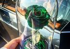 Bông hồng không tàn trong nhiều năm dành cho giới siêu giàu