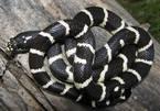 Nghệ An: Kinh hoàng cô gái trẻ bị rắn độc chui vào chăn cắn tử vong