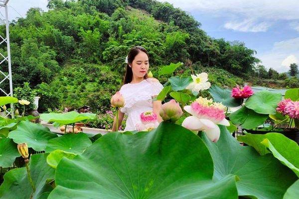 'Đầm sen' hơn 30 loại trồng ngay tại nhà của cô giáo Sơn La