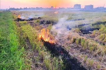 Giảm xả rác, ngăn chặn đốt rơm rạ ở Nam Định