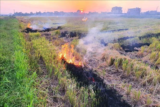xả rác,đốt rơm rạ,Nam Định,ô nhiễm môi trường,bảo vệ môi trường