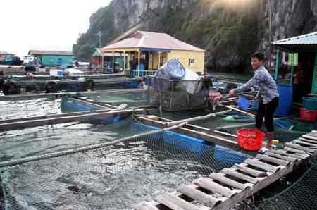 Quảng Ninh: Phát triển ngành thủy hải sản giúp hàng nghìn hộ dân có thu nhập ổn định
