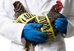 Trung Quốc tiếp tục phát hiện trường hợp mắc cúm gia cầm trên người