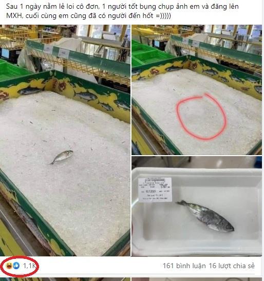 Cười rớt hàm với câu chuyện 'chú cá cô đơn' trong siêu thị ở TP.HCM