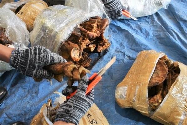 Bắt lô hàng lớn nghi sừng tê giác và xương động vật hoang dã từ Nam Phi